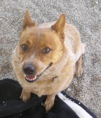 Featured Shelter Animals and Tips April 25, 2014