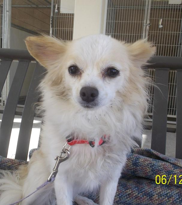 Featured Shelter Animals – June 13, 2014