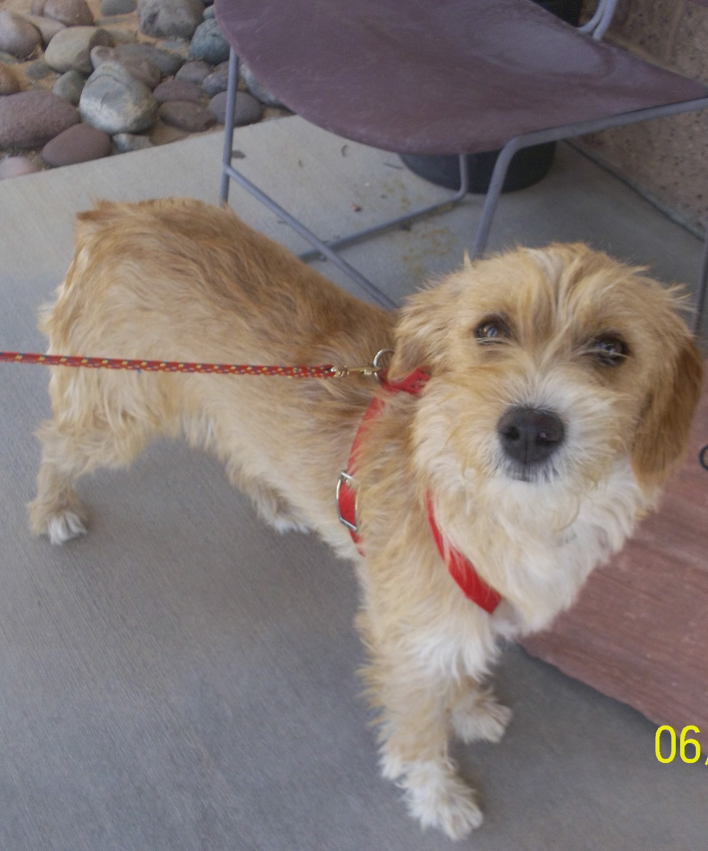 Featured Shelter Animals June 27, 2014