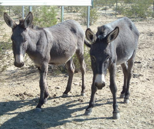 Local Satellite Adoption Center for Peaceful Valley Donkey Rescue featured in National Magazine.