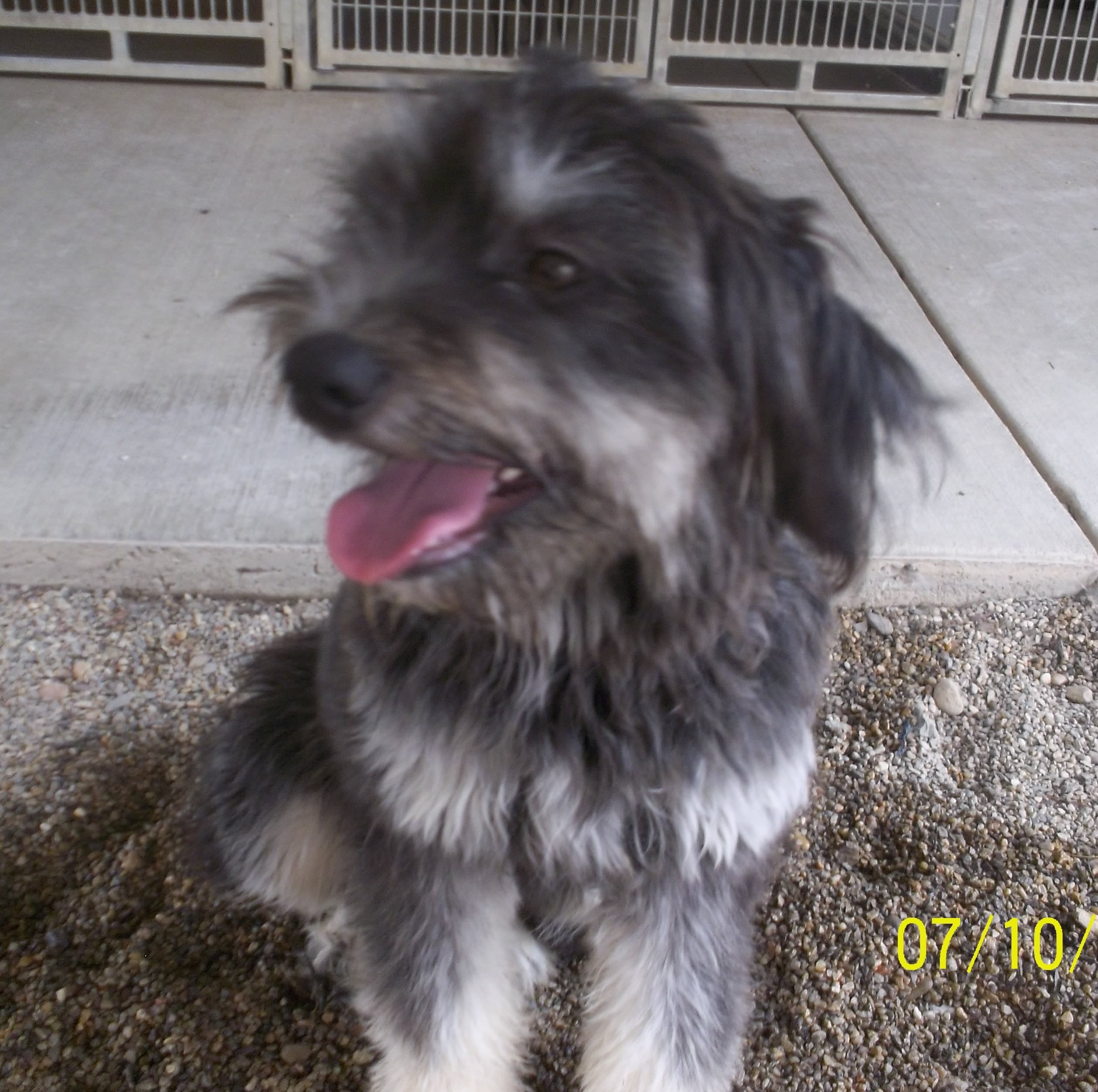 Featured Shelter animals and information