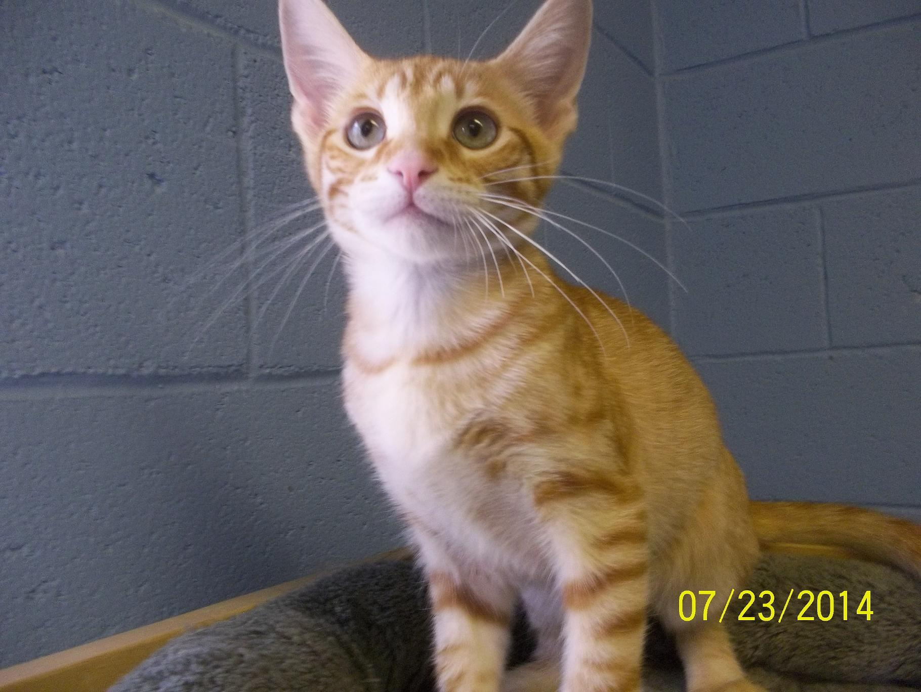 Featured Shelter Animals July 24, 2014