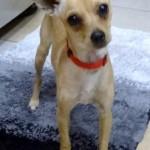 WCFA Pets Needing People Aug. 8, 2014
