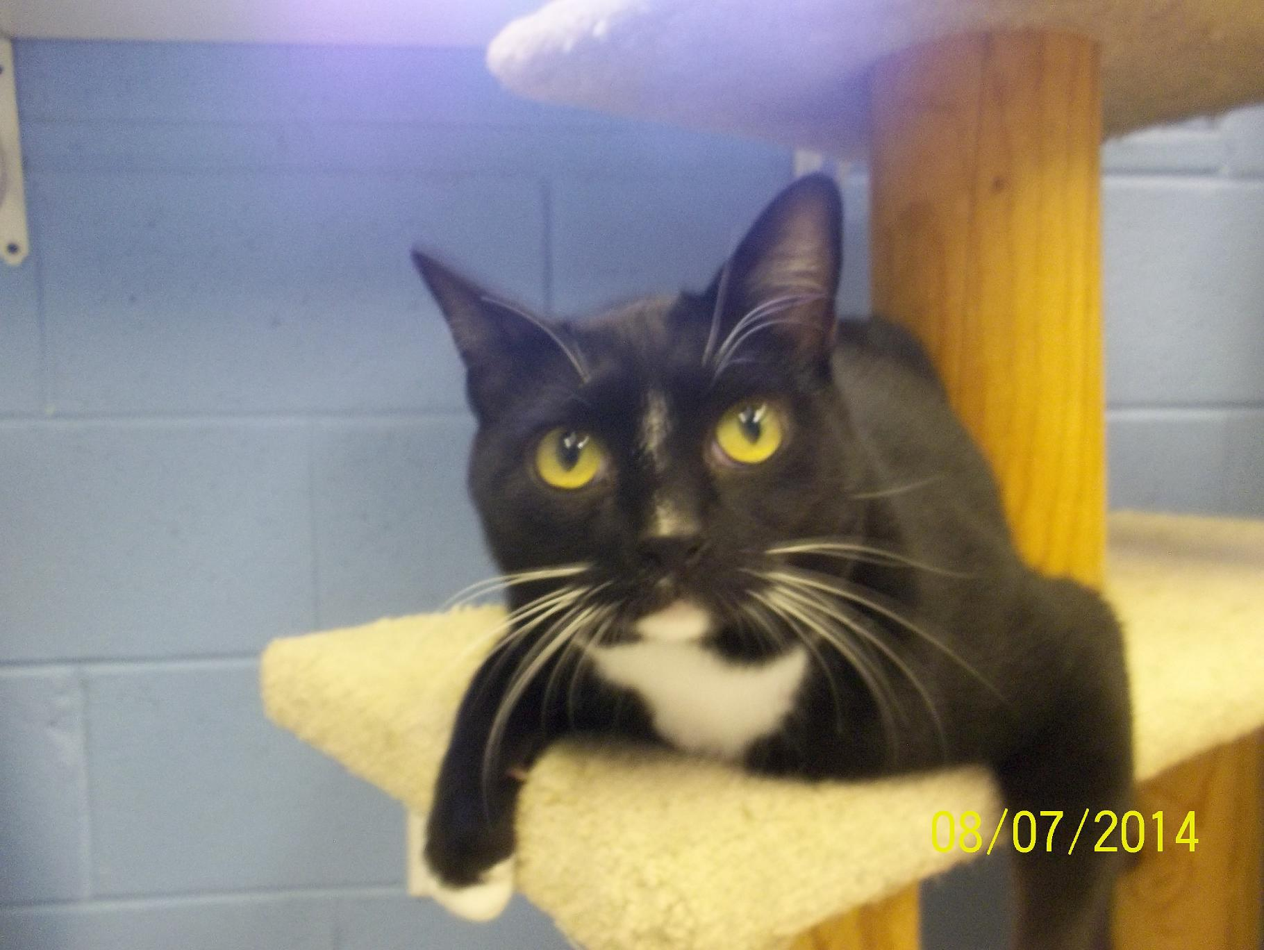 Featured Shelter Animals, Aug. 8, 2014