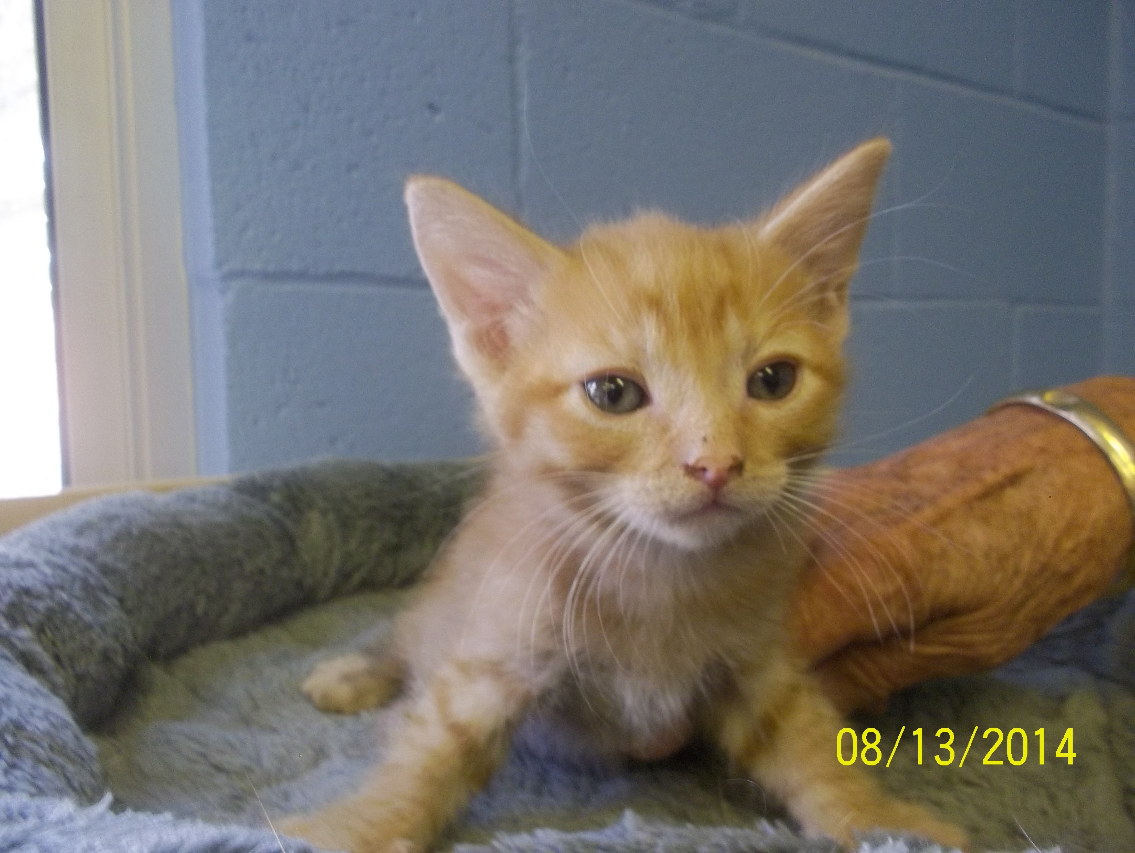 Featured Shelter Animals August 29, 2014