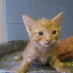 Featured Shelter Animals Aug. 22, 2014