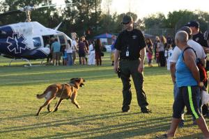 MPD Officer Averett puts his Belgium Malinois police dog through his training. Photo by Lou Martin