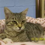 Featured Shelter Animals Oct. 31, 2014