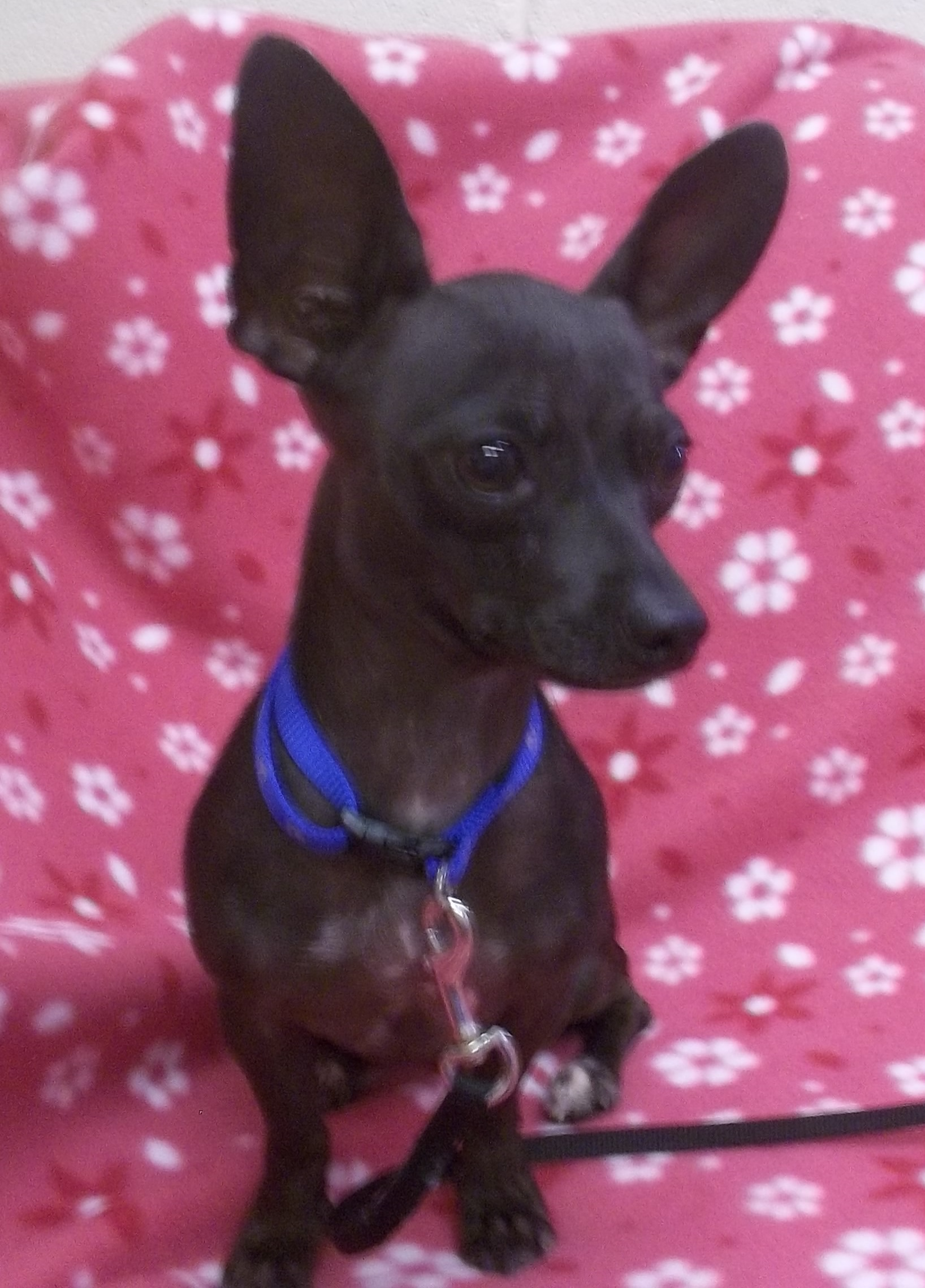 Featured Shelter Animals Oct. 24, 2014