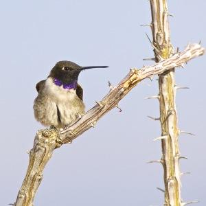 Photo by David Boyarski of Mesquite.