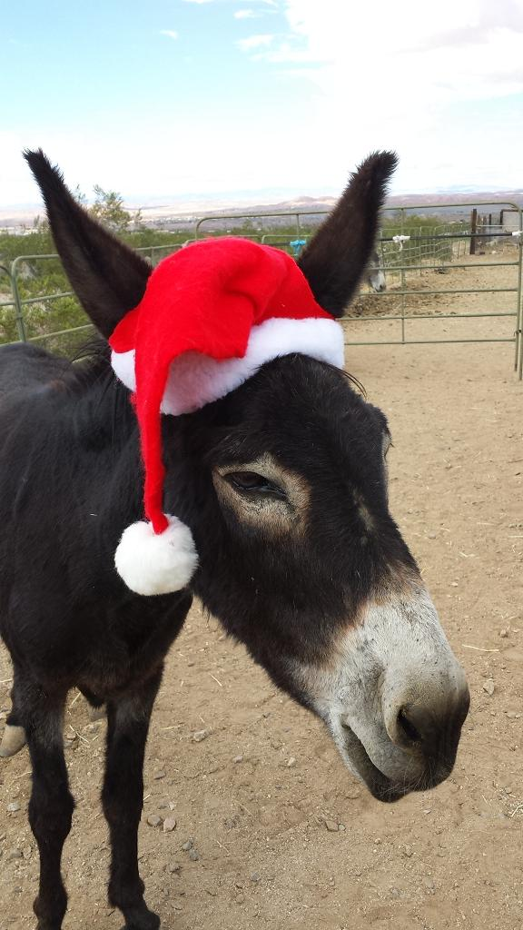 Donkey Foster Program Available