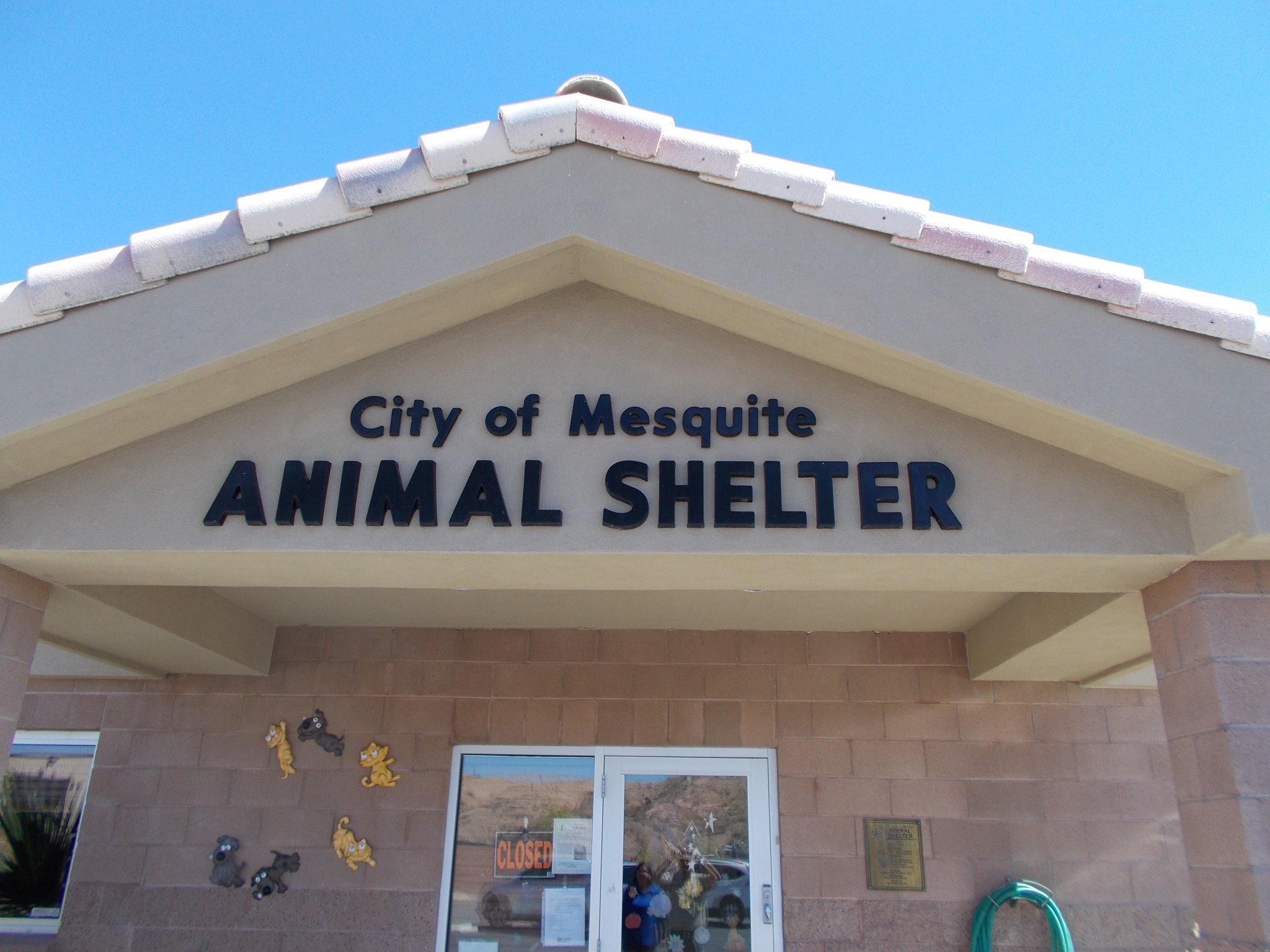 Mesquite Animal Shelter Pet Listing November 25, 2016