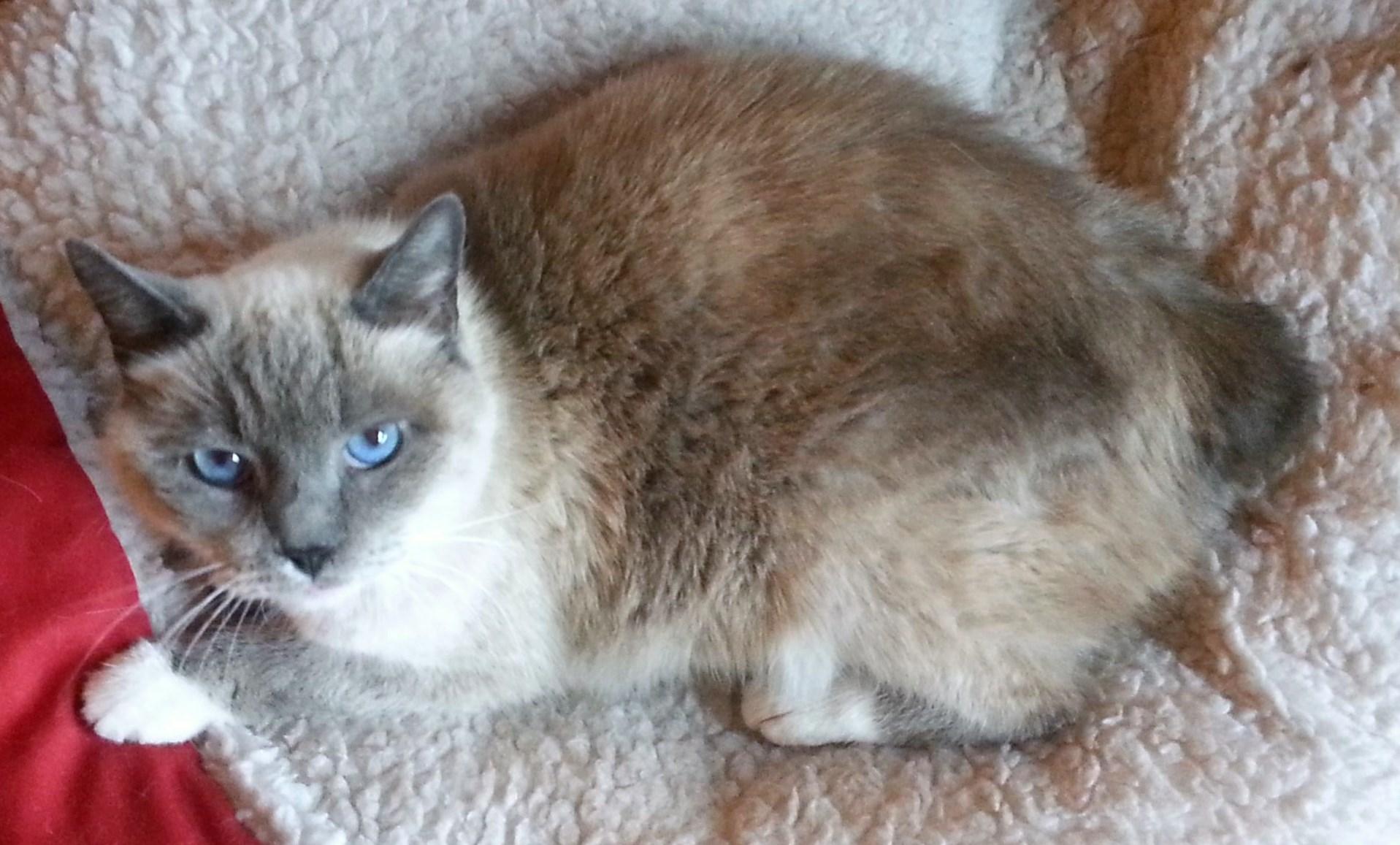 WCFA Pets Needing People March 25, 2015