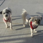 Featured Shelter Animals March 6, 2015
