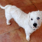 WCFA Pets Needing People April 10, 2015