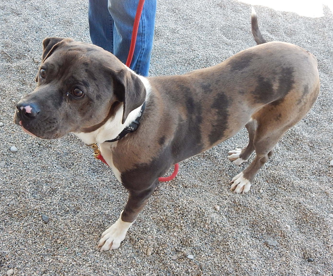 Featured Shelter Animals April 17, 2015