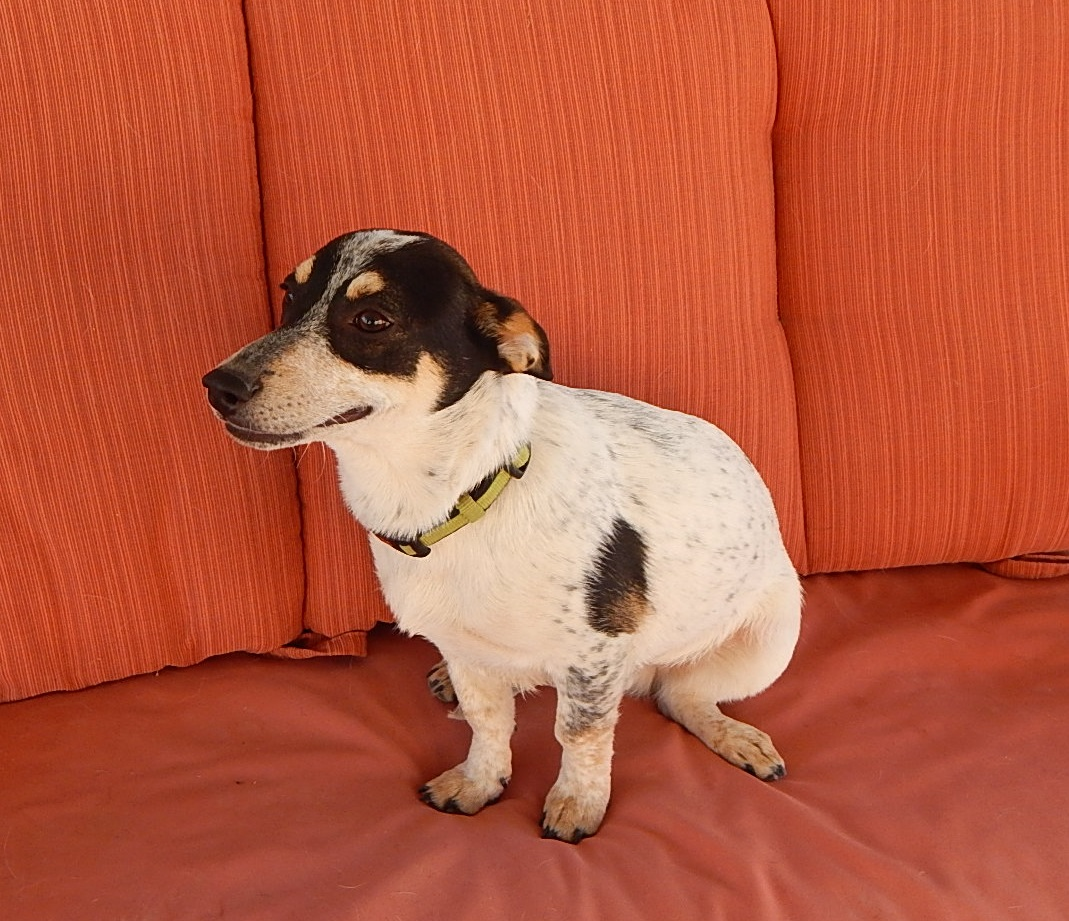 Featured Shelter Animals April 24, 2015