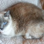 WCFA Featured Pets for April 24, 2015