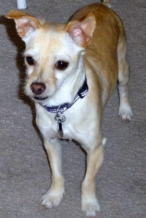 WCFA Featured Pet