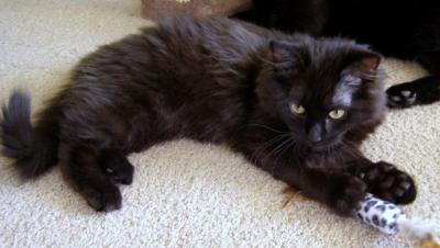 WCFA Pets for April 16, 2015