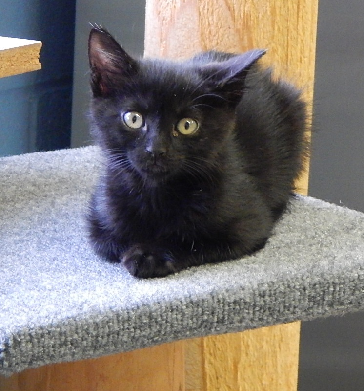 Featured Shelter Animals May 15, 2015