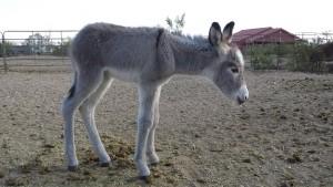 MLN-Donkeymay28-15