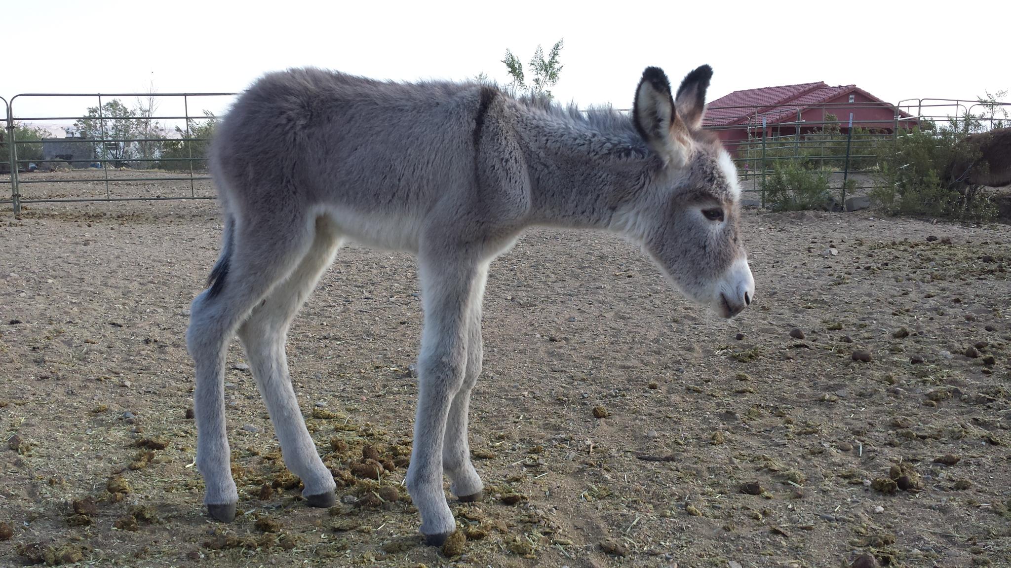 Name The Baby Donkey And Birthday Celebration