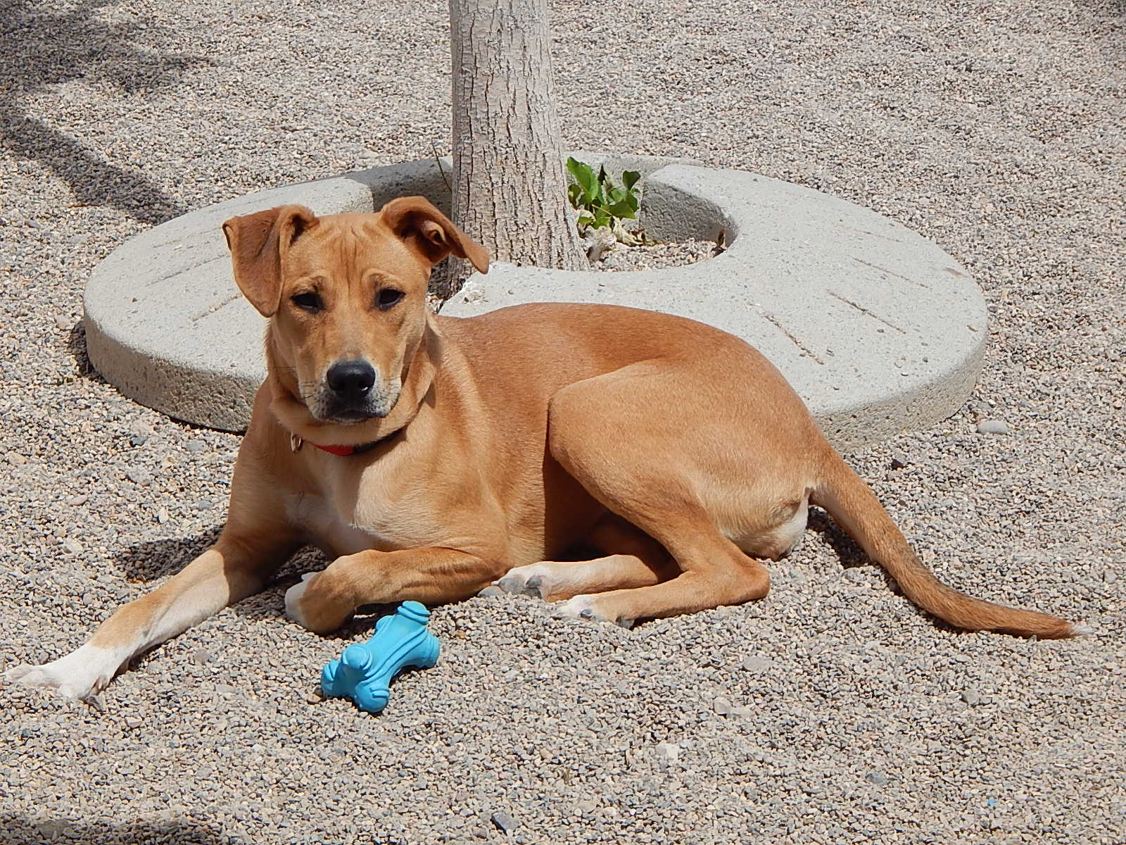 Featured Shelter Animals May 1, 2015