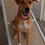 Featured Shelter Animals May 22, 2015