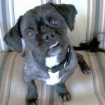 WCFA Pets Needing People May 28, 2015