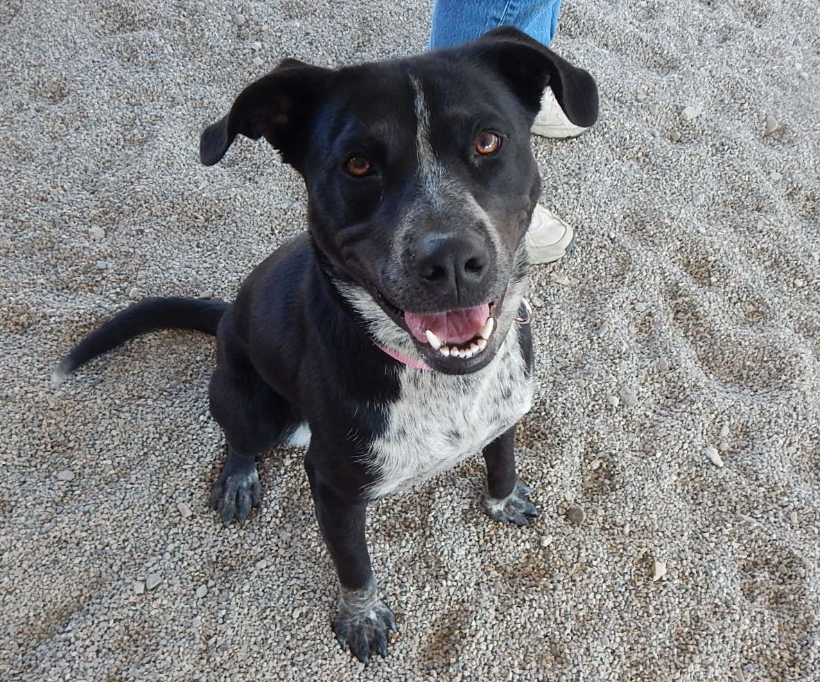 Featured Shelter Animals May 29, 2015