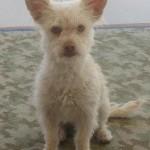 WCFA Pets Needing People May 21, 2015