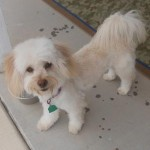 Featured Shelter Animals May 8, 2015