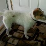 WCFA Pets Needing People May 6, 2015