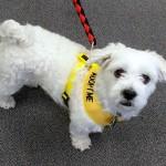 WCFA Pets Needing People June 4, 2015