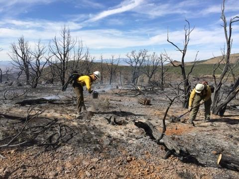 Wildfire Update for the BLM Arizona Strip District June 18, 2015