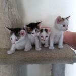 WCFA Pets Needing People June 12, 2015