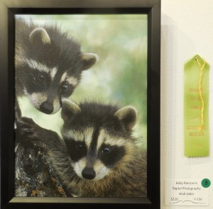 Walt Alder's photo, Baby Raccoons, earned Honorable Mention. Photo by Linda Faas.