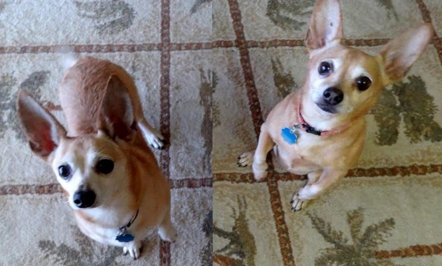 WCFA Pets Needing People June 30, 2015
