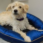 Featured Shelter Animals June 12, 2015