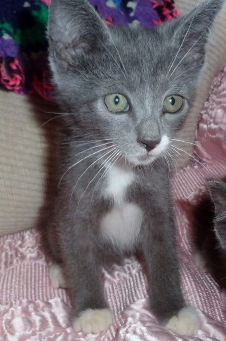 WCFA Featured Pet of the Week: Pewter