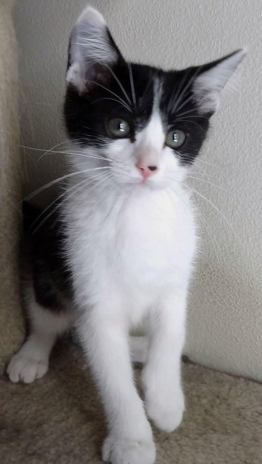 WCFA Pets Needing People July 24, 2015
