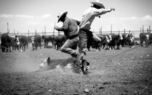 It takes two cowboys to lasso and bring down a 200-pound calf for branding. ItÕs grueling work in 90-degree heat, through a nonstop scrum of charging livestock and constant dust clouds that leave some ranch hands with pneumonia. PHOTO BY JEFF SCHEID