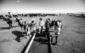 Horses get a water break as cowboys share ranching stories. In one of many nods to the modern era, Twin Springs rounds up temporary ranch hands for branding season through 21st Century methods such as Facebook status updates. PHOTO BY JEFF SCHEID