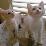 WCFA Pets Needing People July 10, 2015