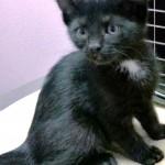 WCFA Pets Needing People July 30, 2015