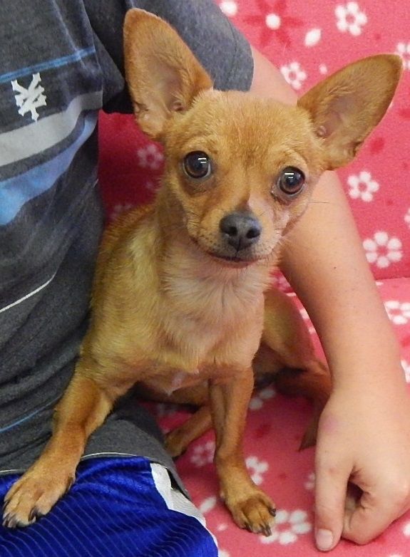 Featured Shelter Animals July 10, 2015