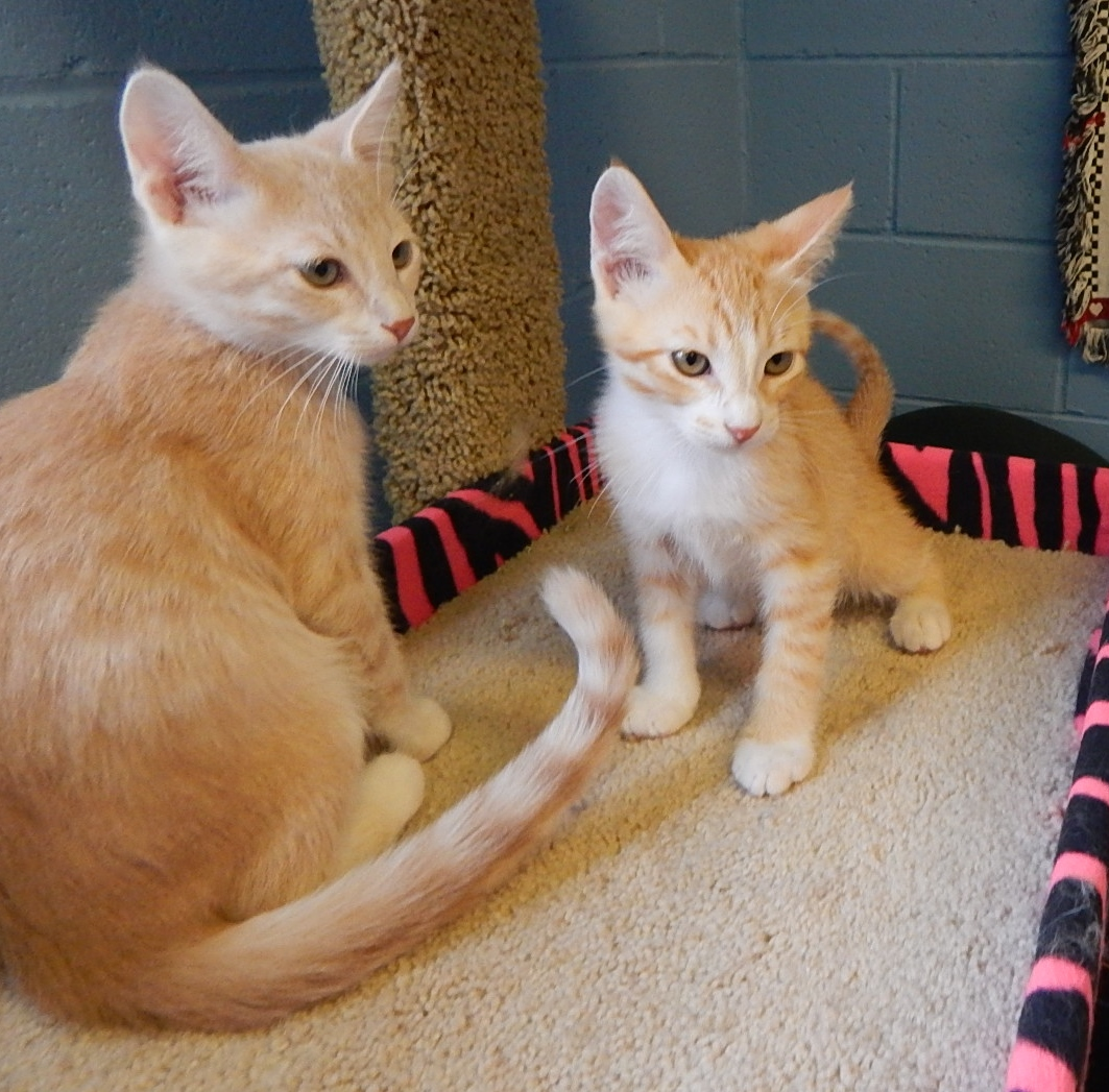Featured Shelter Animals July 31, 2015