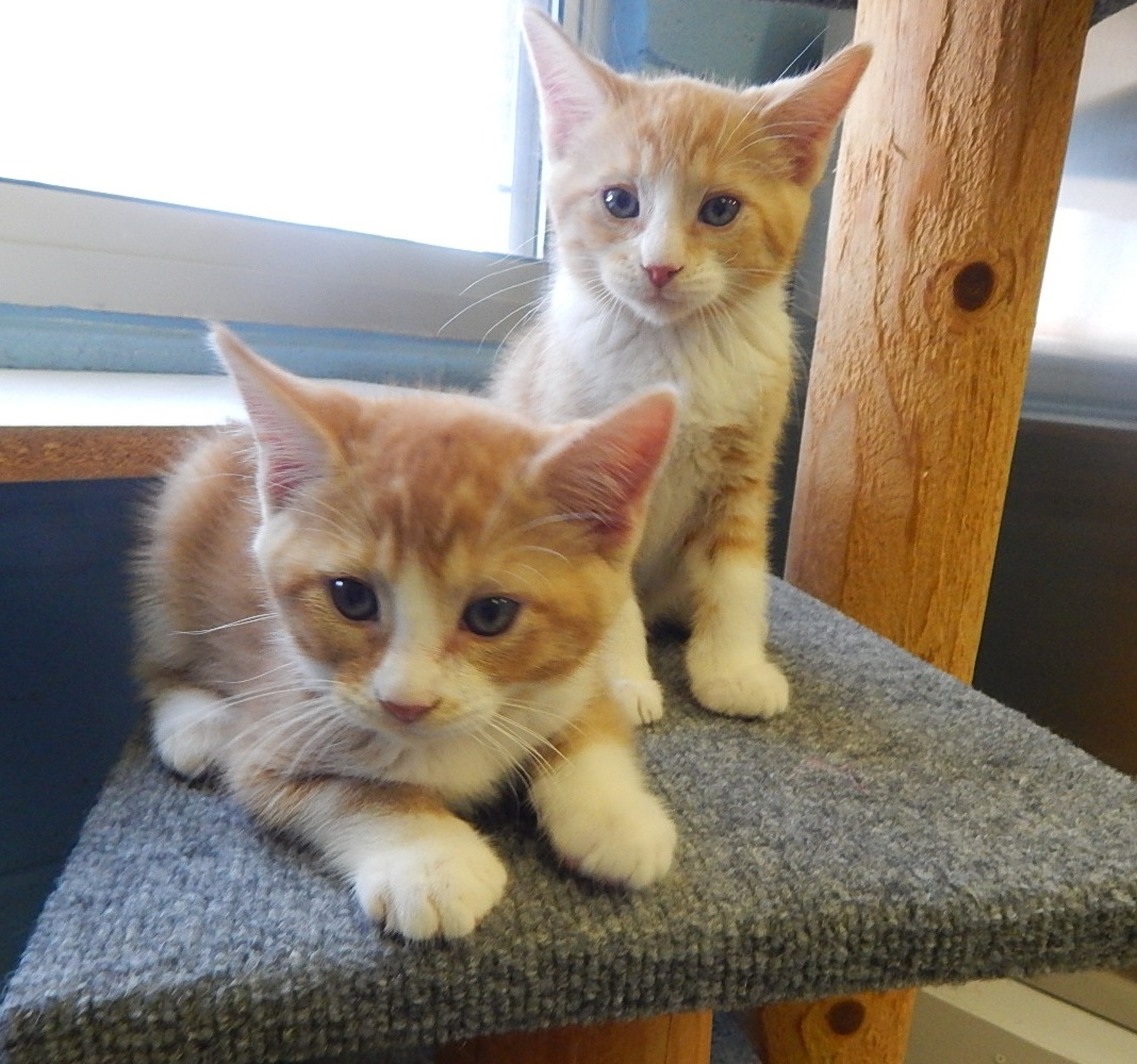 Featured Shelter Animals July 3, 2015