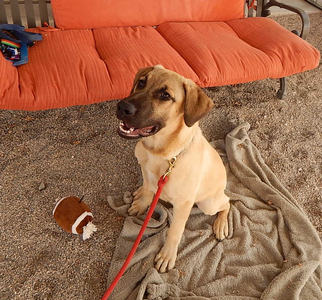 Featured Shelter Animals August 8, 2015